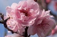 April Gardening Hints and Tips
