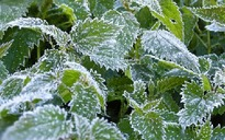 Protect your plants from late frosts