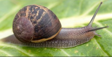 Slug and Snail control