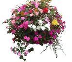 Planting Hanging baskets and tubs