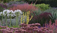 Looking after your garden in a dry spell