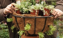 How to plant hanging baskets - tips and ideas