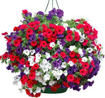 Caring for summer baskets and tubs