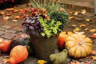 Gardening tips for October