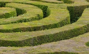 Keeping Hedges neat and tidy