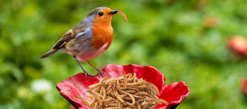 Multi-Buy Mealworm Offer From The Garden Factory