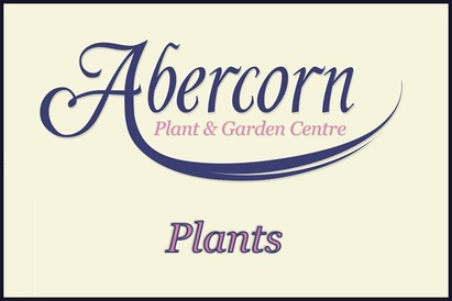 Plants at Abercorn